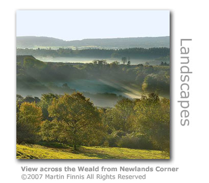 Newlands Corner by Martin Finnis