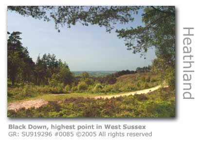 BLACK DOWN WEST SUSSEX