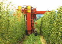Mechanised Hop-picker