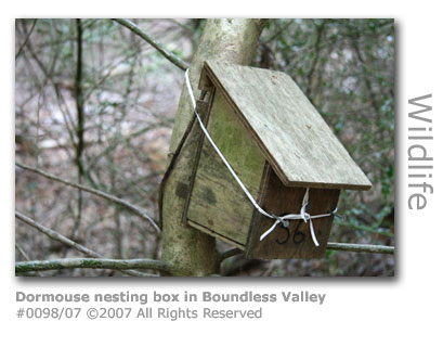 Dormouse nesting box