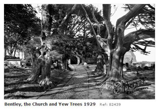 Bentley Church and yew trees 1929