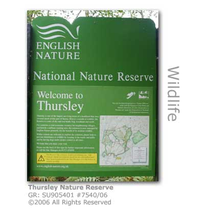 Thursley Nature Reserve