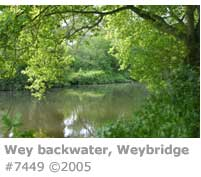 WEY NEAR WEYBRIDGE