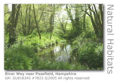 RIVER WEY PASSFIELD HAMPSHIRE